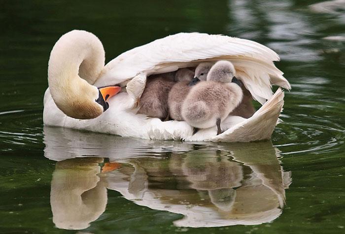 fotos tiernas de pajaros padres madres e hijos 5