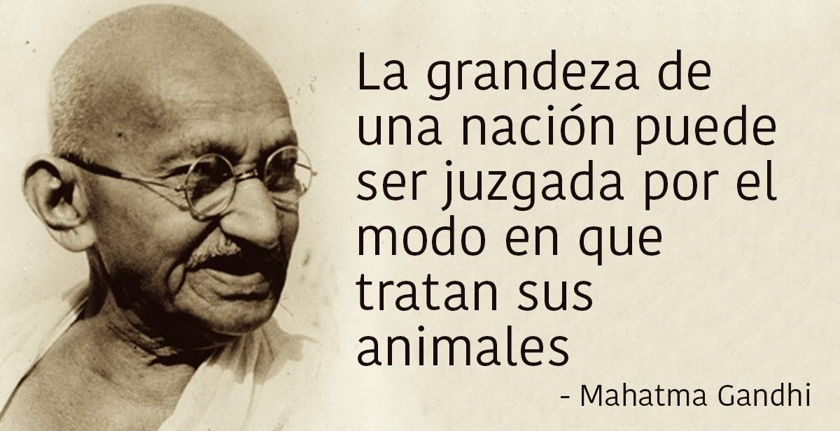 Las 20 Mejores Frases De Mahatma Gandhi Que Te Harán