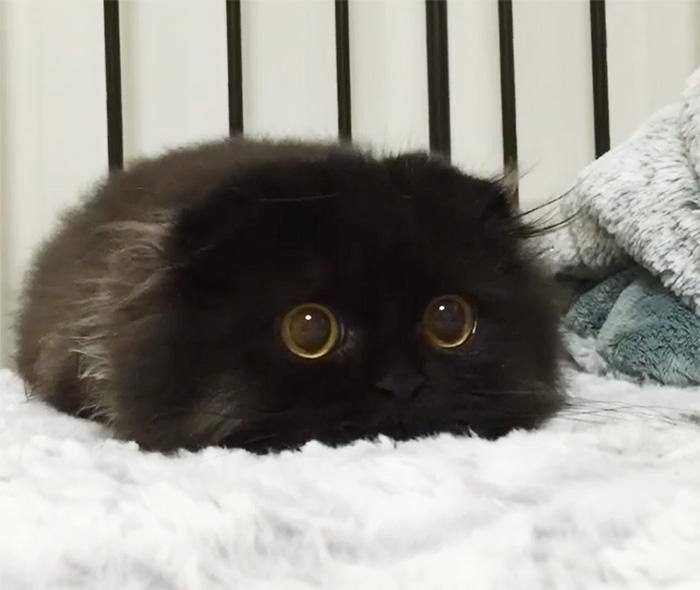 gato ojos grandes 1