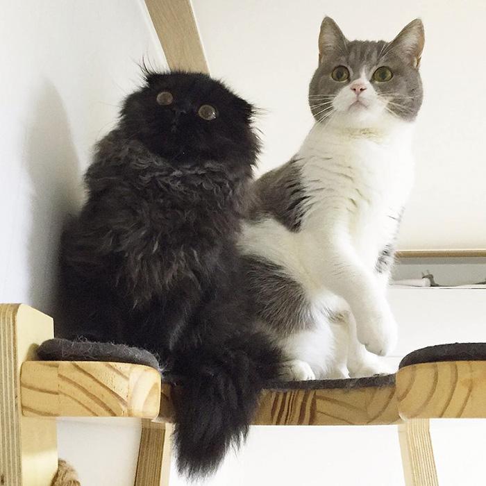 gato ojos grandes 10