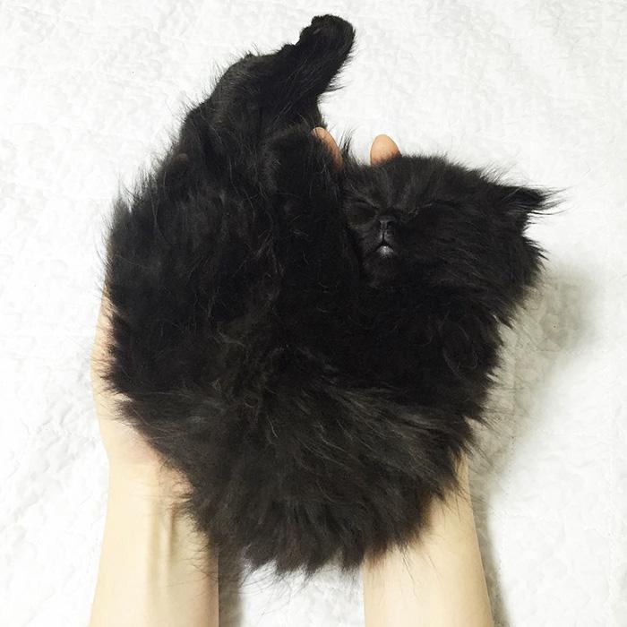 gato ojos grandes 12