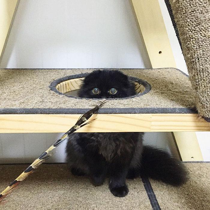 gato ojos grandes 13