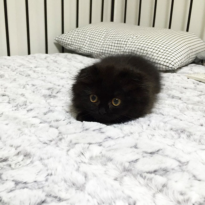 gato ojos grandes 14