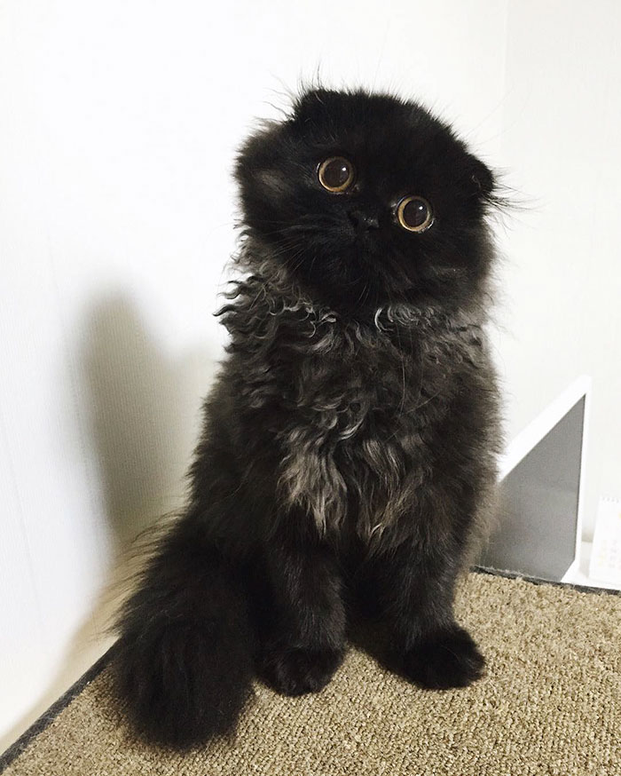 gato ojos grandes 17