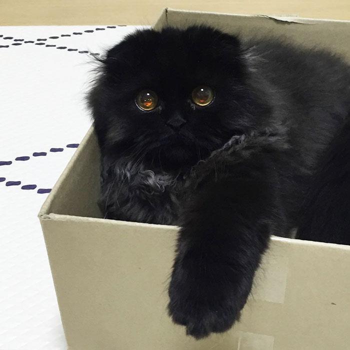 gato ojos grandes 18