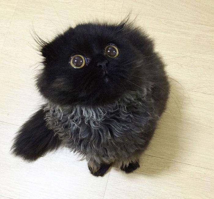 gato ojos grandes 2
