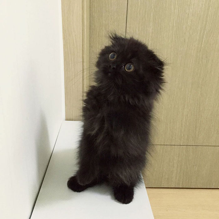 gato ojos grandes 3