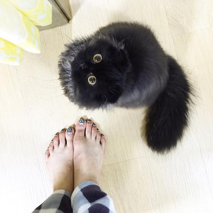 gato ojos grandes 4