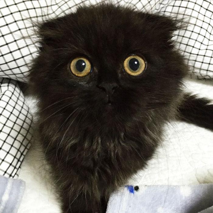 gato ojos grandes 6
