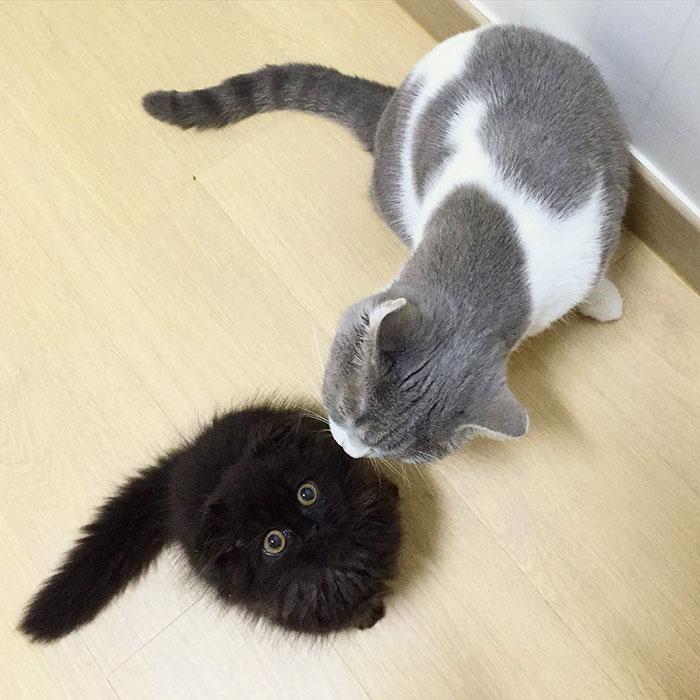 gato ojos grandes 8