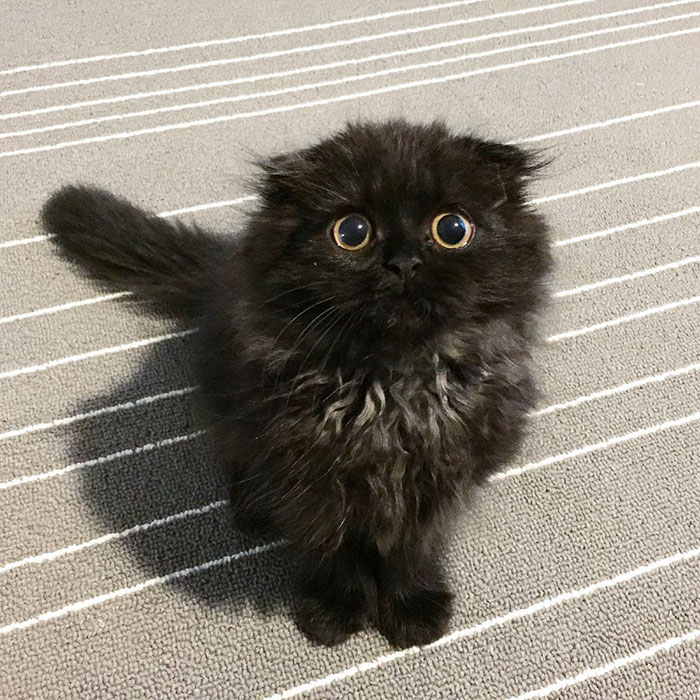 gato ojos grandes 9