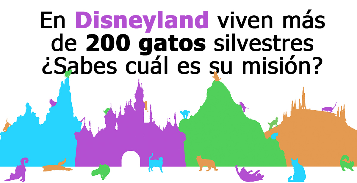 gatos-disneyland