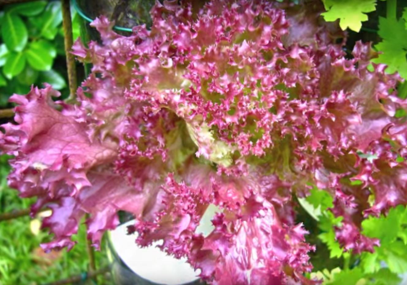 jardin_vertical_20