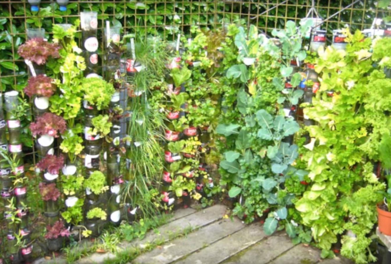 jardin_vertical_21