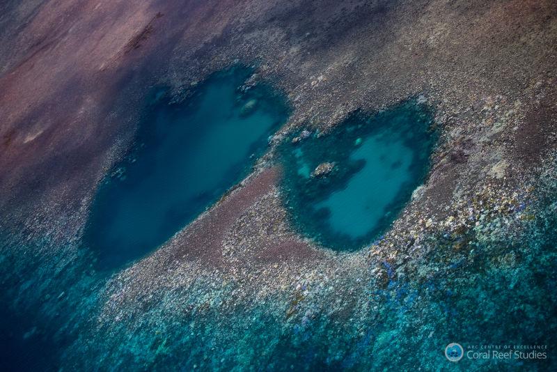 la gran barrera de coral esta siendo devastada por una plaga 2