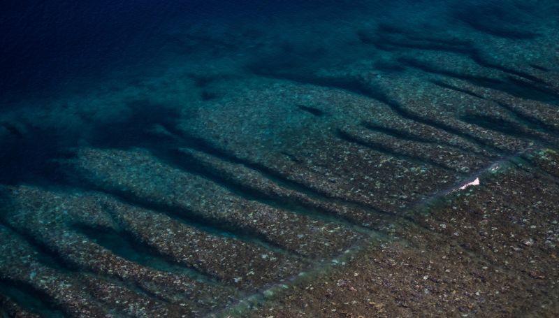 la gran barrera de coral esta siendo devastada por una plaga 3