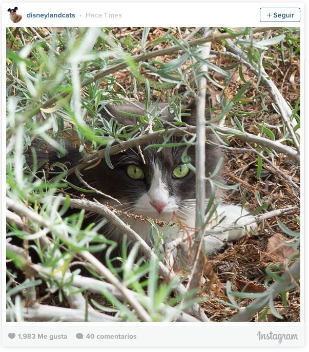 la historia de los gatos de disneyland 10
