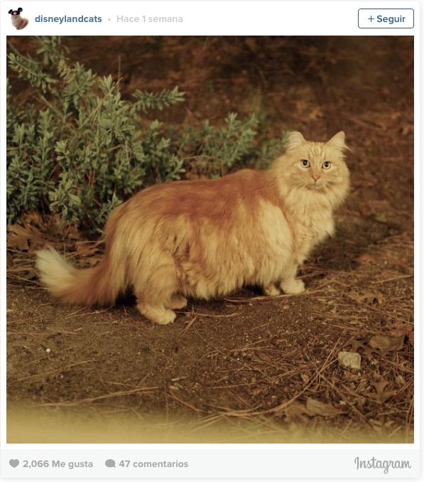 la historia de los gatos de disneyland 11