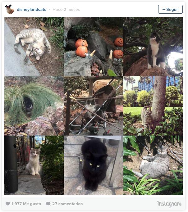 la historia de los gatos de disneyland 3