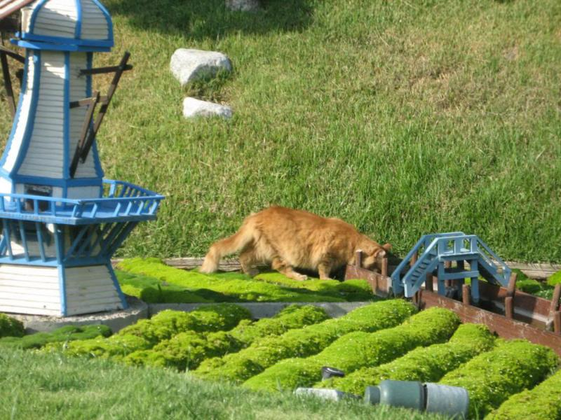 la historia de los gatos de disneyland 7