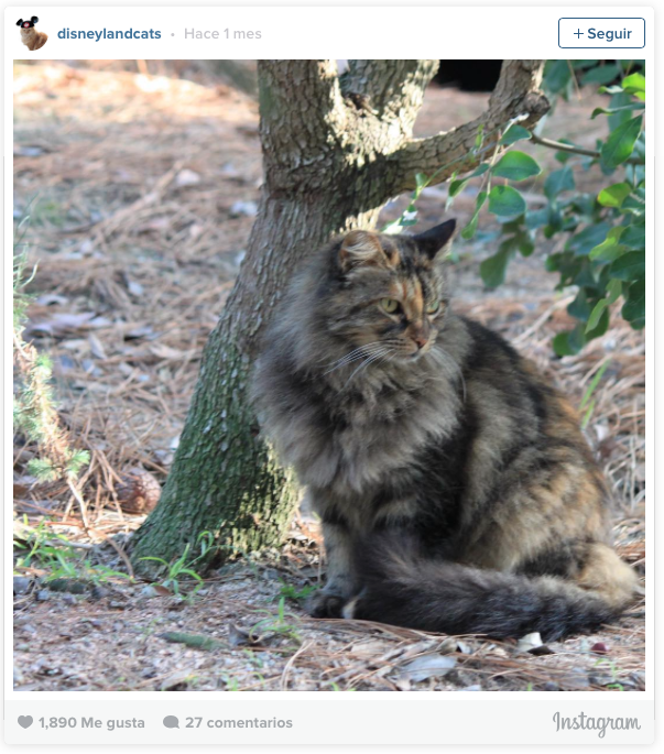 la historia de los gatos de disneyland 8
