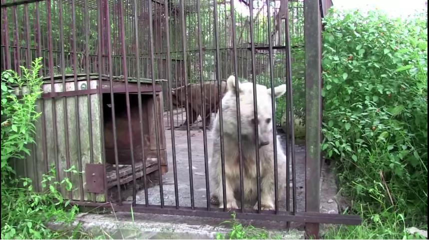 oso liberado despues de 30 años entre rejas