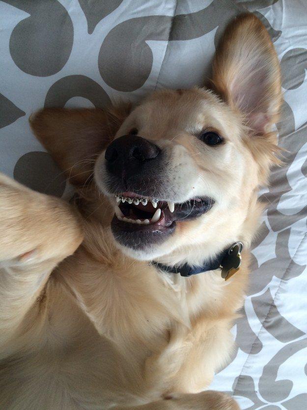 perro con aparato 8