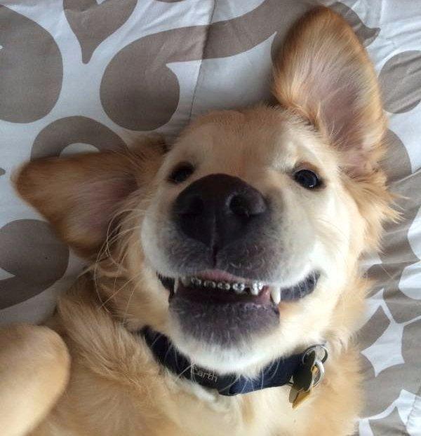 perro con aparato 9
