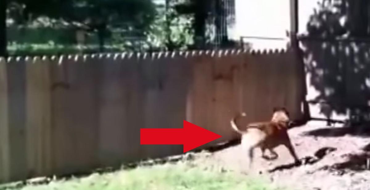 perro-valla
