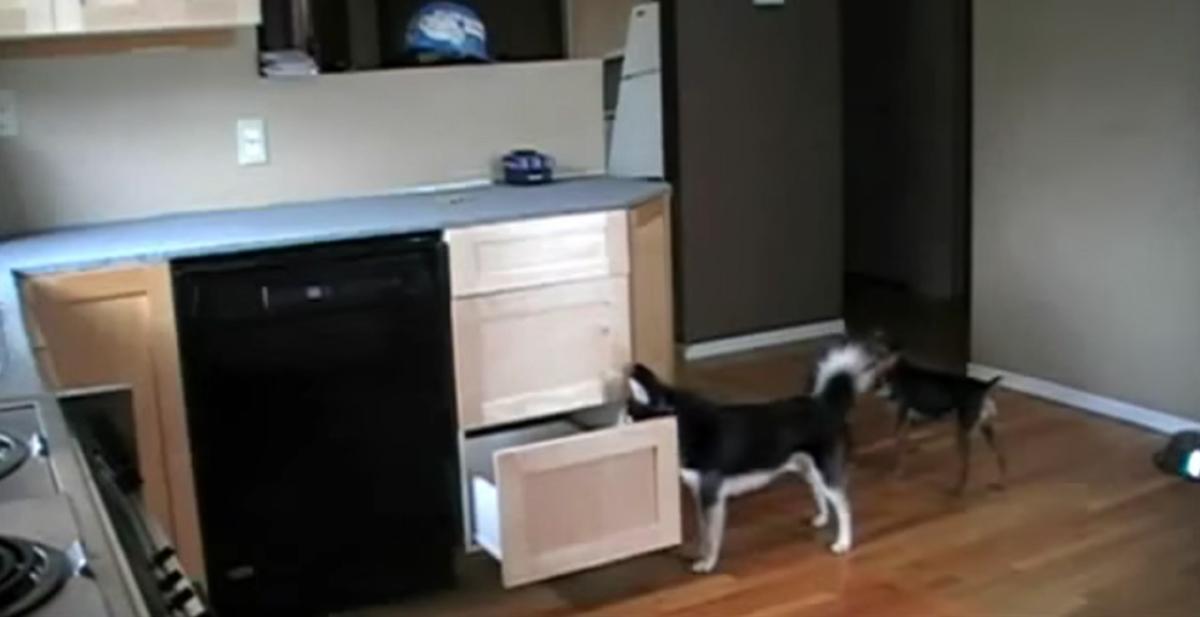 perros que se fabrican una escalera