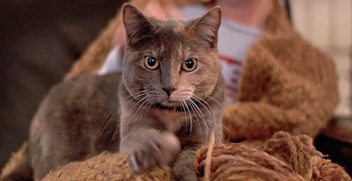 por que amasan los gatos y masajean