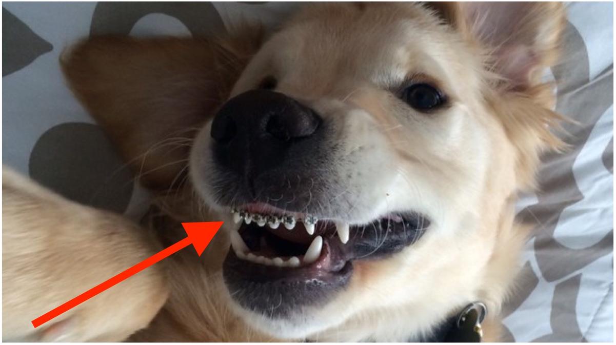 portada perro aparato