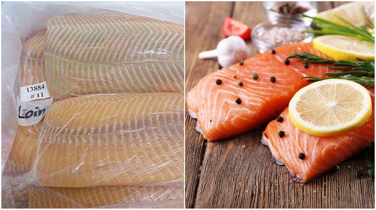 portada salmon