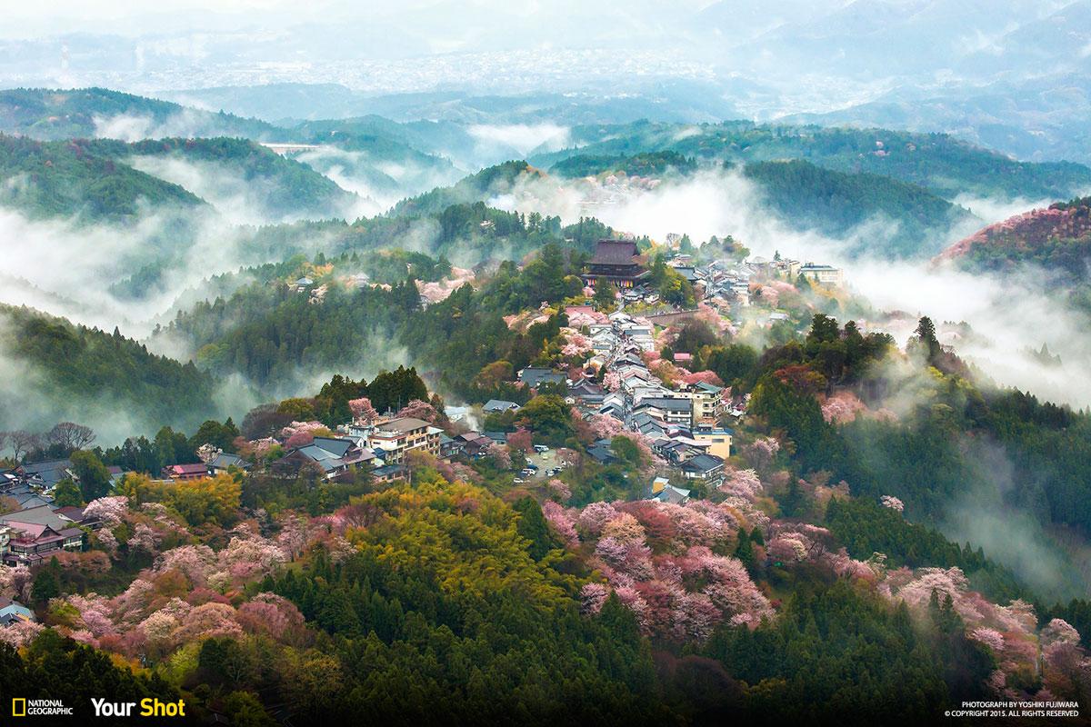 Fotografía y el título por Yoshiki Fujiwara / National Geographic Your Shot