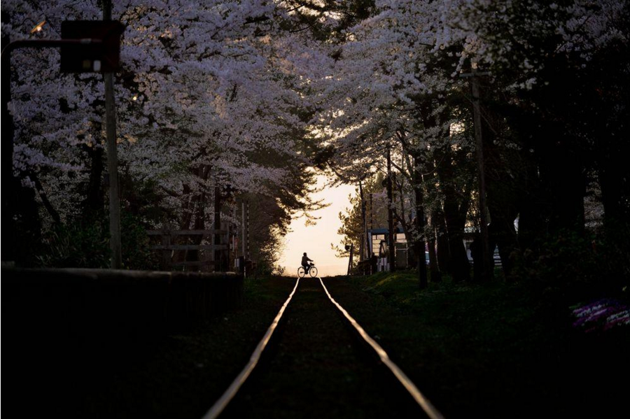 Fotografía por Sho Shibata / National Geographic Your Shot