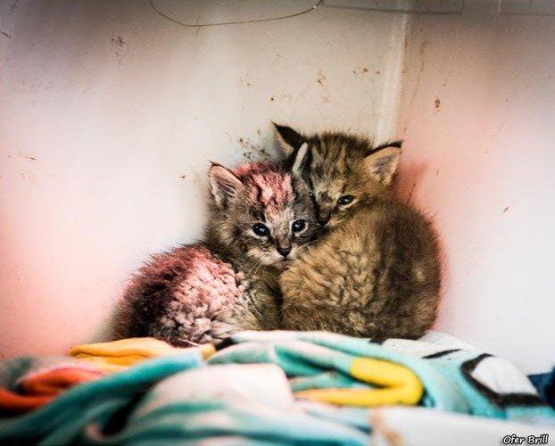 rescato a uos gatos y resultaron ser gatos salvajes de la jungla 11