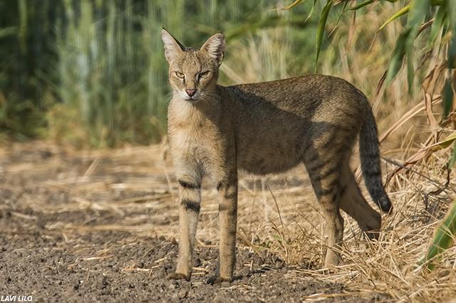 rescato a uos gatos y resultaron ser gatos salvajes de la jungla 16