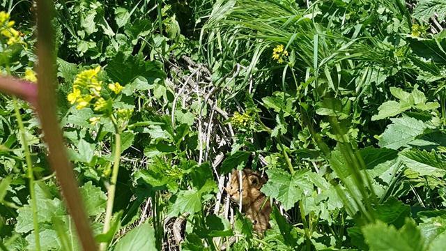 rescato a uos gatos y resultaron ser gatos salvajes de la jungla 3