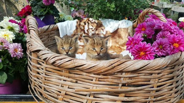 rescato a uos gatos y resultaron ser gatos salvajes de la jungla 4