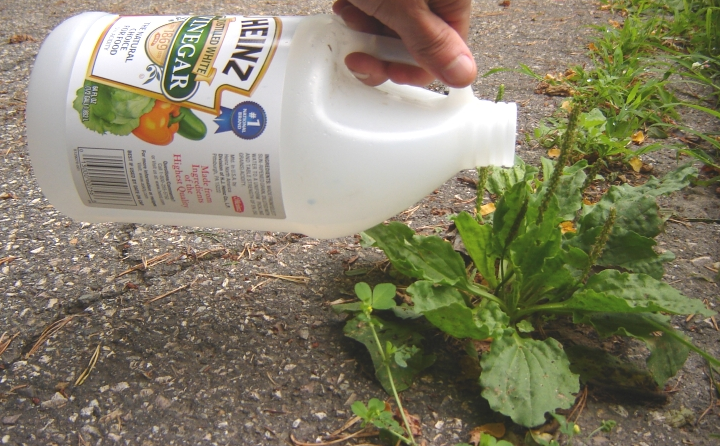 9 formas eficaces de acabar con las malas hierbas de tu for Como evitar que salga hierba en el jardin