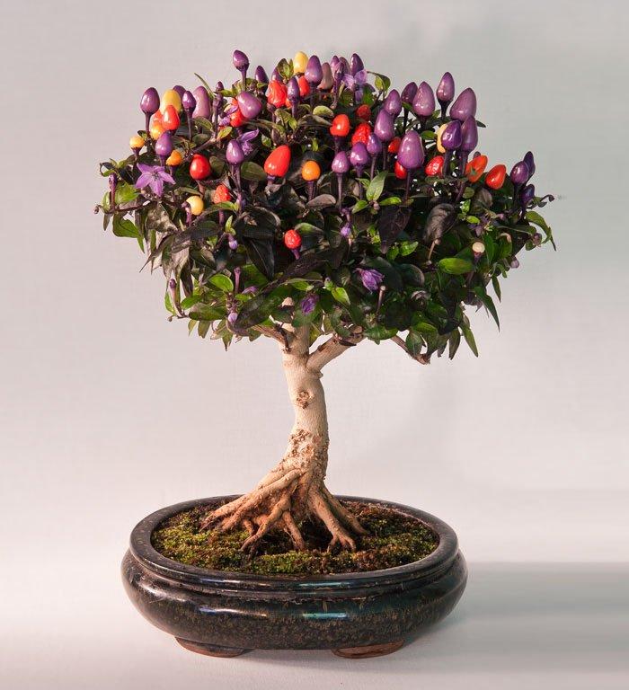 bonsais con un aspecto magico 12