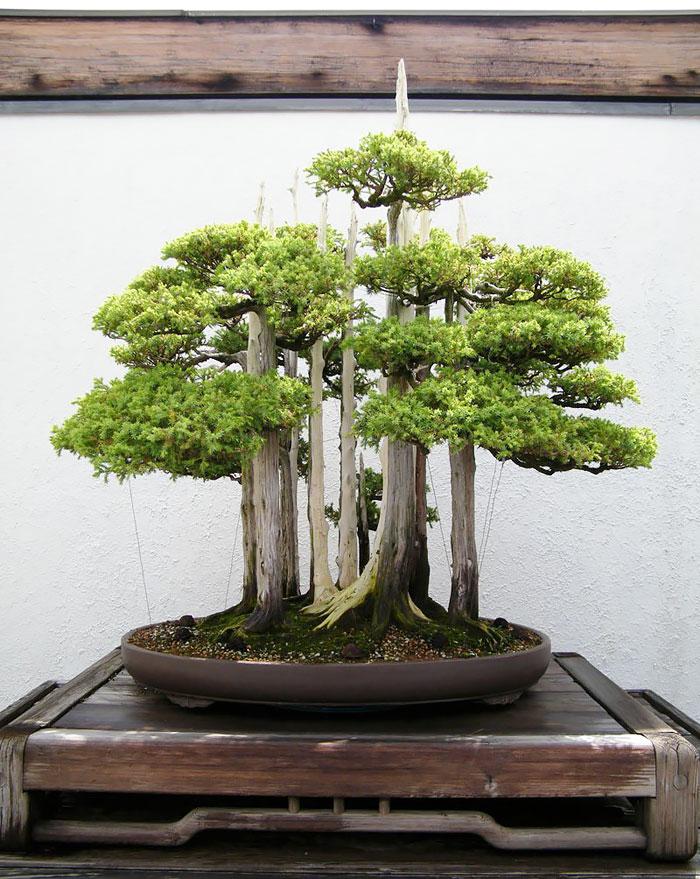 bonsais con un aspecto magico 6
