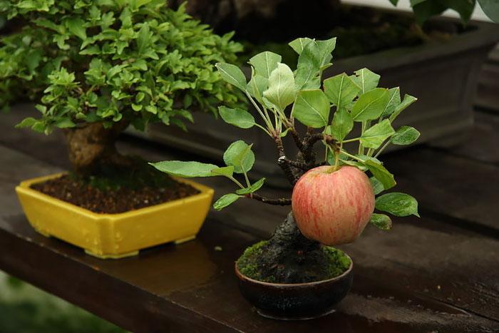 bonsais con un aspecto magico 9