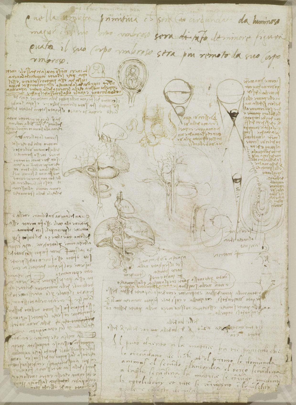 estudio anatomico leornado 1