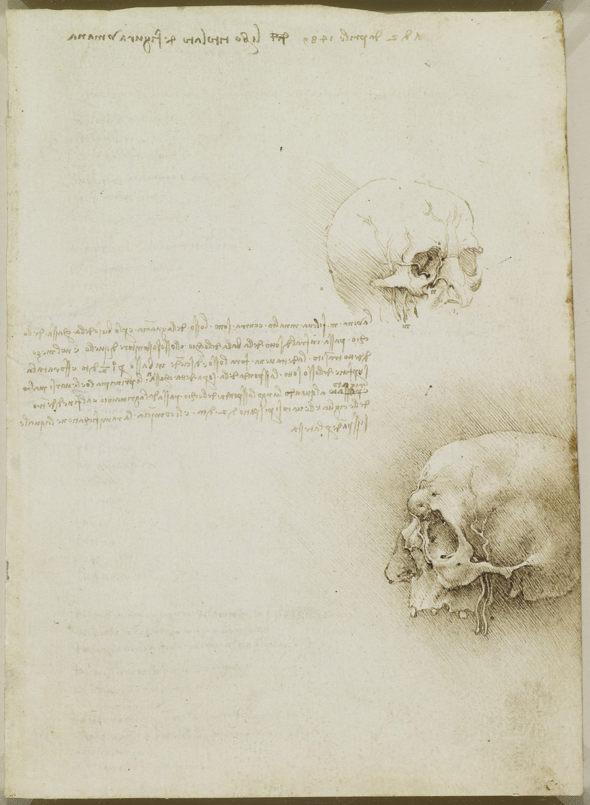 Recto: Studies of a cranium. Verso: Notes on the nerves and move