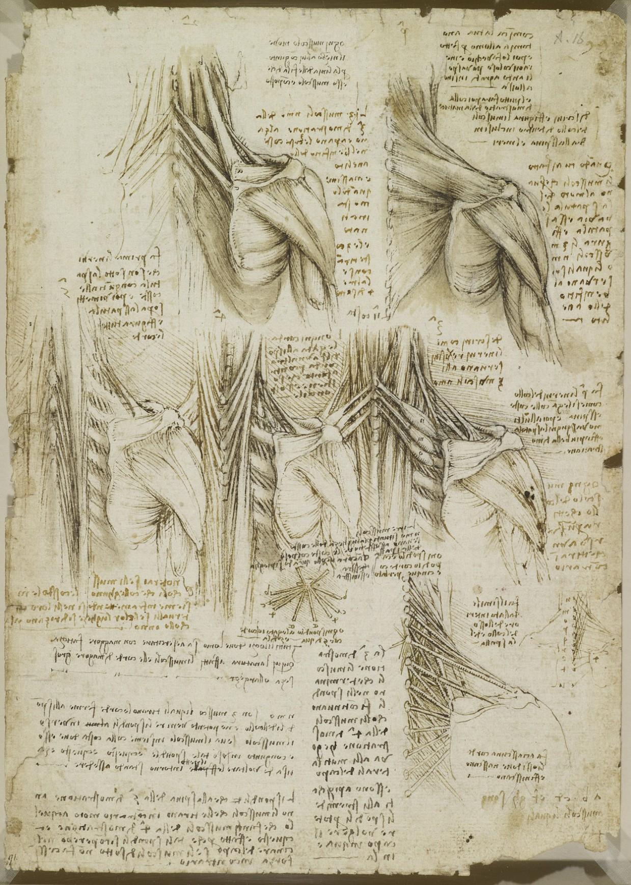estudio anatomico leornado 16