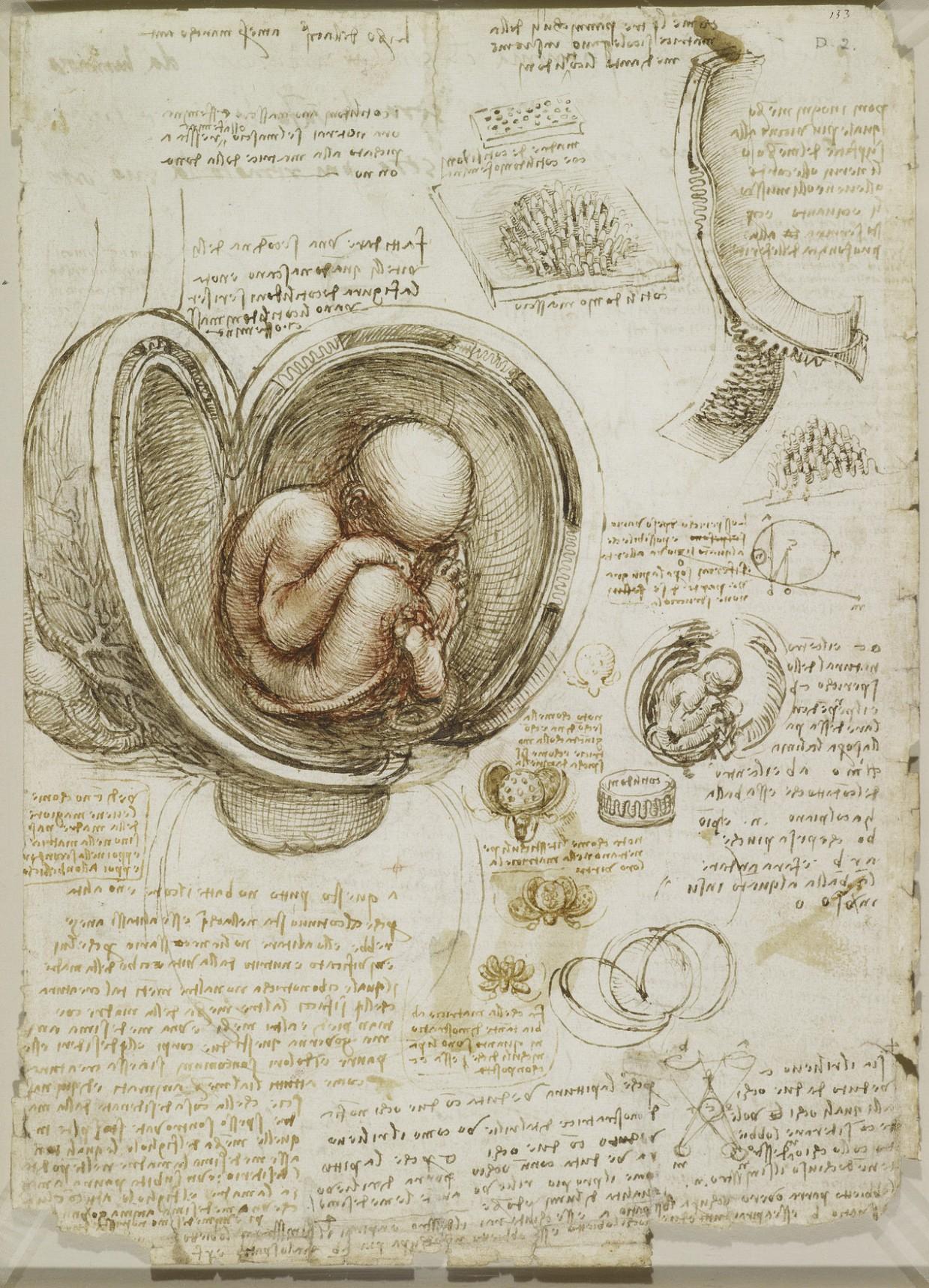 estudio anatomico leornado 2