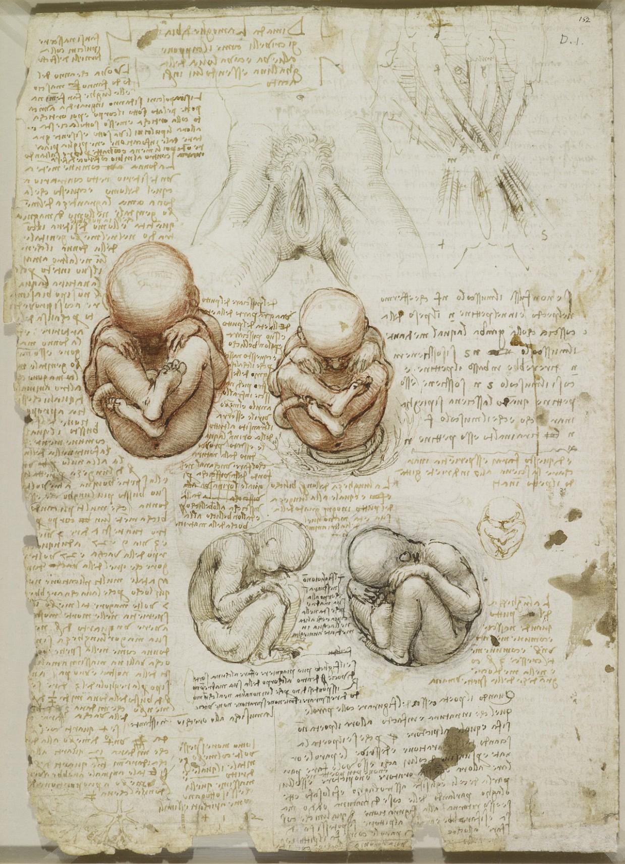 estudio anatomico leornado 21