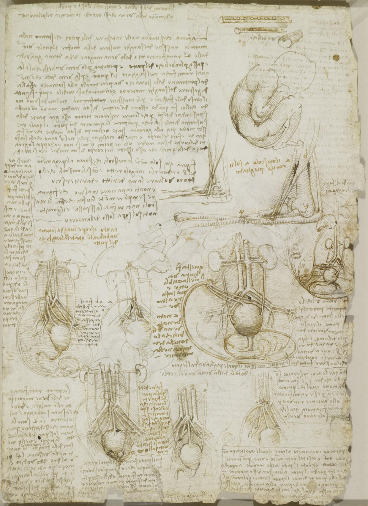 estudio anatomico leornado 23