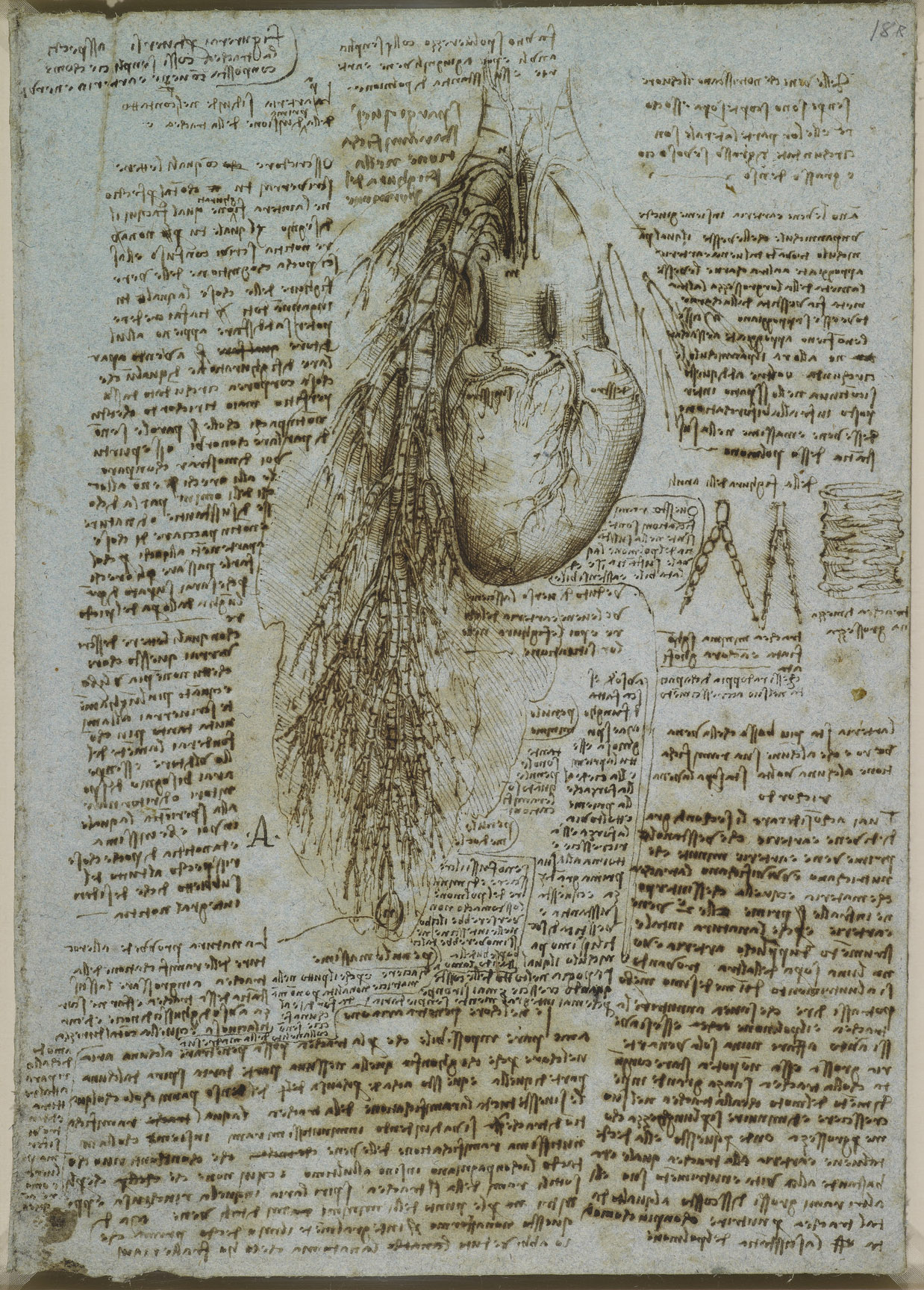 Recto: Studies of the heart and pulmonary vessels of an ox. Vers